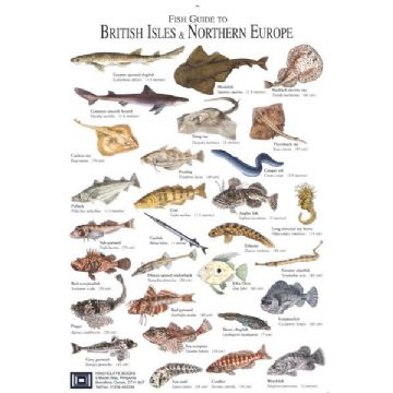 Fish ID Card British Isles and Northern Europe